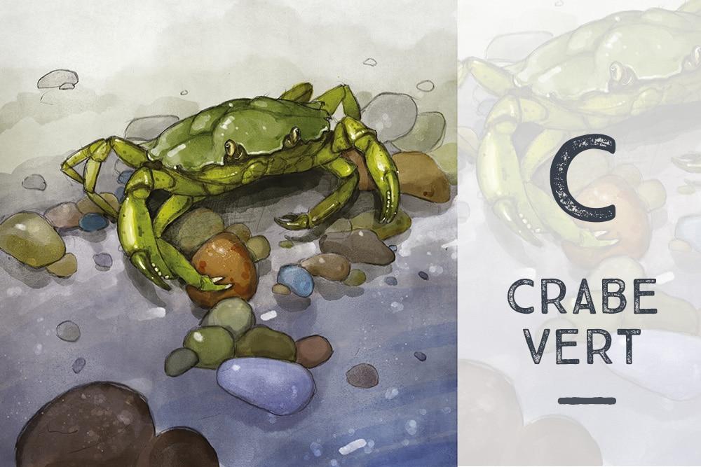 C  comme Crabe Vert