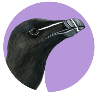 Art-nid-thologie : les oiseaux des Îles-de-la-Madeleine