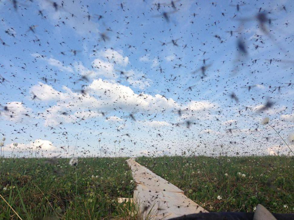 Le Mosquito Project: les moustiques font le buzz