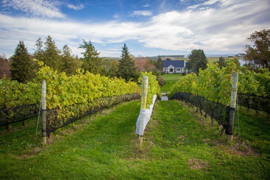 Vallée d'Annapolis, la route des vins de l'Atlantique