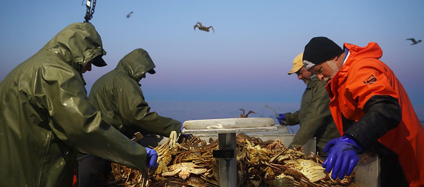 La pêche au crabe